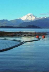 Técnico Salmonicultura